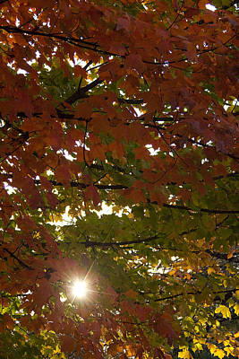 Vertical Photograph - Sunburst Through The Leaves by Andrew Soundarajan