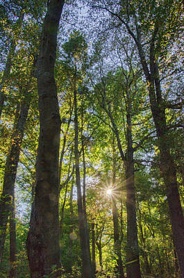 Photograph - Sunburst Through The Trees by Beth Sawickie