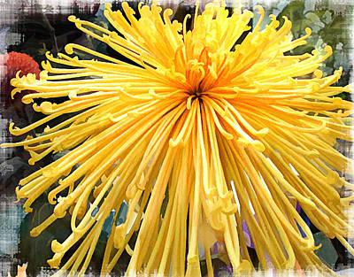 Mums Painting - Sunburst Yellow Spider Mum by Elaine Plesser