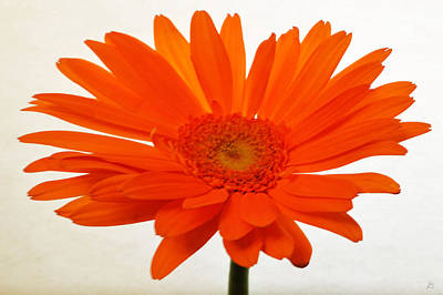Sunburst Floral Still Life Photograph - Sunburst Zinnia by Sherry Allen