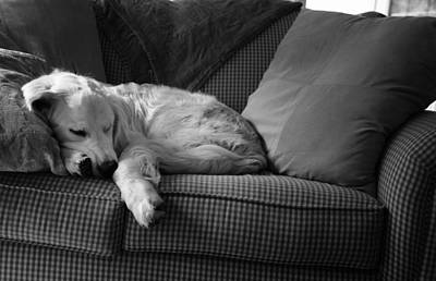 Photograph - Sunday Afternoon Nap by Coby Cooper