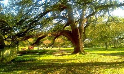 Photograph - Sunday In The Park At Audubon Park New Orleans La Usa by Michael Hoard