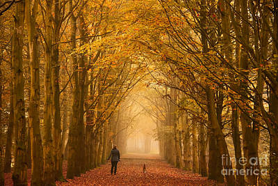 Photograph - Sunday Morning Walk With The Dog In A Foggy Forest In Autumn by IPics Photography
