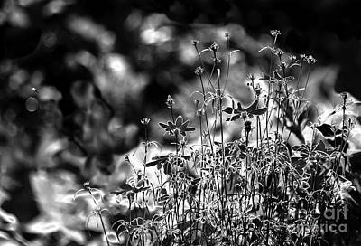 Digital Art - Sunday S Garden Look by Leo Symon