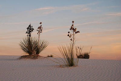 Photograph - Sundown At White Sands by Dakota Light Photography By Dakota