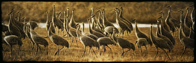 Photograph - Sundown Cranes by Wes and Dotty Weber