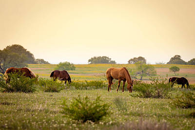 Photograph - Sundown Grazing 771 by Melinda Ledsome