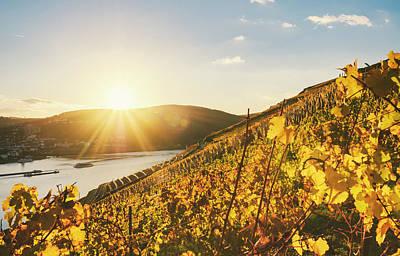Photograph - Sundown In An Autumnal Vineyard Beside by Instamatics