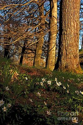Landscape Photograph - Sundown On Wildflowers by Alison Gunn