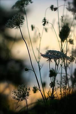 Photograph - Sundown by Tracy Male