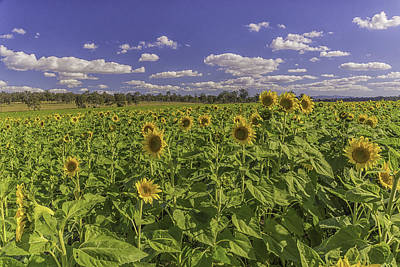 Photograph - Sunfield by Peter Lombard