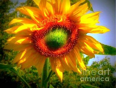 Photograph - Sunflower - You've Got A Friend by Janine Riley
