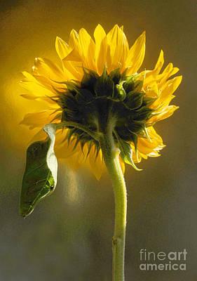 Sunflower 1 Print by Addie Hocynec