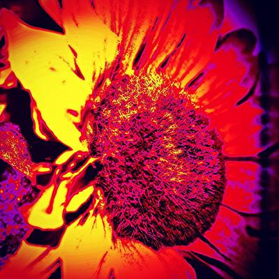 Botanical Photograph - Sunflower 2 by Jason Michael Roust