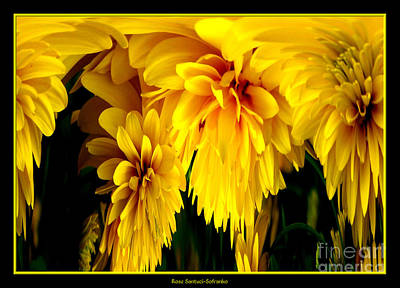 Photograph - Sunflower Abstract 1 by Rose Santuci-Sofranko
