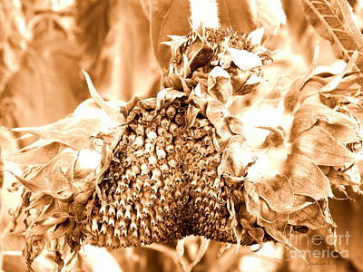 Sunflower - After Summer Has Gone Print by Janine Riley