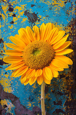 Chip Photograph - Sunflower Against Old Wall by Garry Gay