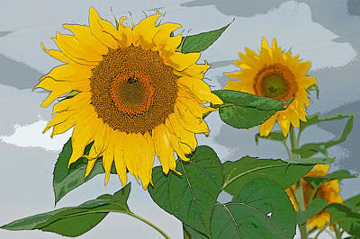 Photograph - Sunflower by Aimee L Maher Photography and Art Visit ALMGallerydotcom