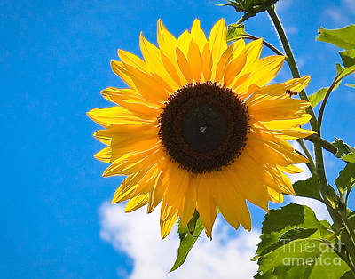 Photograph - Sunflower And Bee At Work by John Waclo