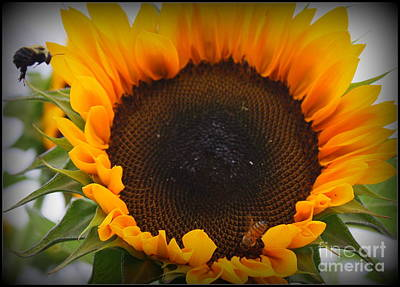 Sunflower And Buzzing Bee Original by Dora Sofia Caputo Photographic Art and Design