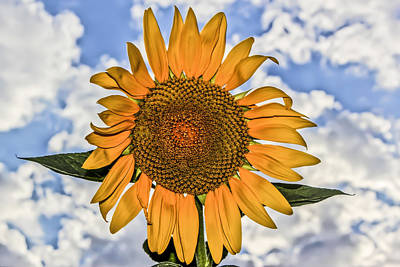 Art Print featuring the digital art 00008 Sunflower And Clouds by Photographic Art by Russel Ray Photos