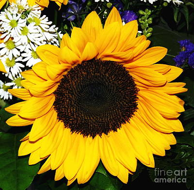 Photograph - Sunflower And Daisies Oil Painting Effect by Rose Santuci-Sofranko
