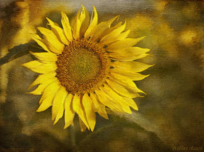 Photograph - Sunflower And Sunshine  by Ivelina G