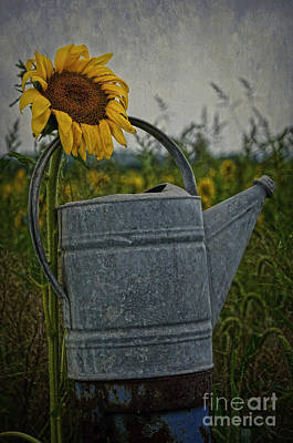 Photograph - Sunflower And Water Bucket by Debra Fedchin