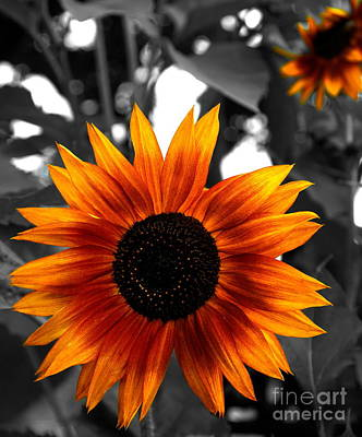Photograph - Sunflower  by Andrea Kollo