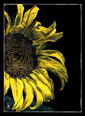 Drawing - Sunflower by Ann Ranlett