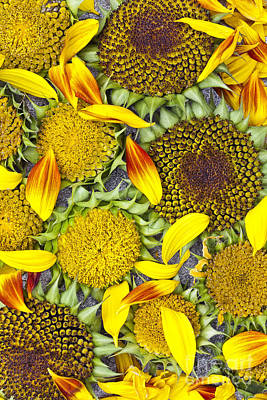 Photograph - Sunflower Arrangement by Alan L Graham