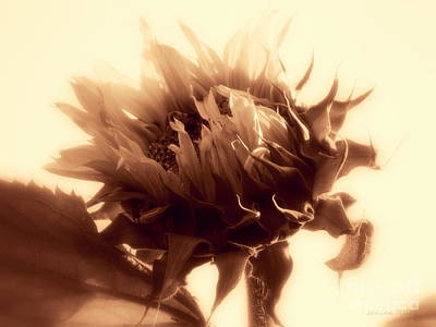 Photograph - Sunflower - Au Revoir by Janine Riley