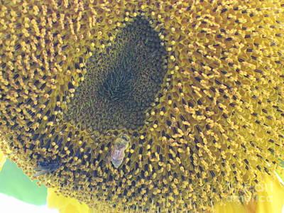 Photograph - Sunflower Bees by Elizabeth Stedman