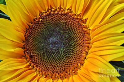 Orange Photograph - Sunflower Bloom by Scott Cameron
