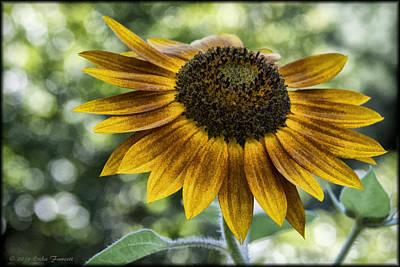 Photograph - Sunflower Bokeh by Erika Fawcett