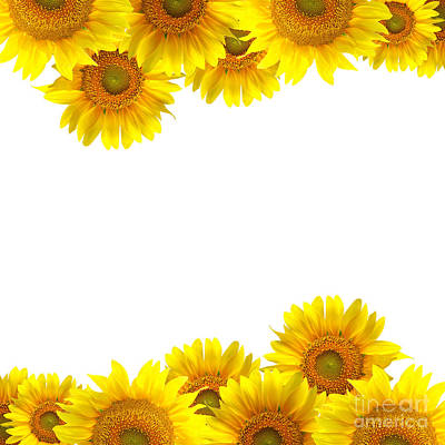 Sunflower Print by Boon Mee