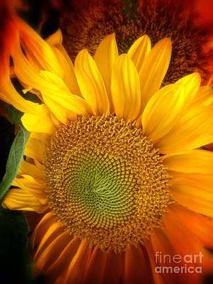 Photograph - Sunflower Bright by Susan Garren