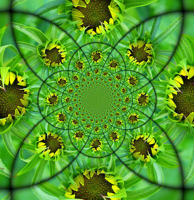 Photograph - Sunflower Bud Kaleidosope by Sheri McLeroy