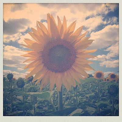 Golden Wall Art - Photograph - Sunflower by Candace Fowler
