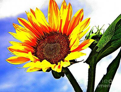 Photograph - Sunflower   by Chris Berry