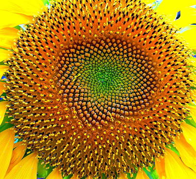 Photograph - Brilliant Sunflower by Jeff Lowe