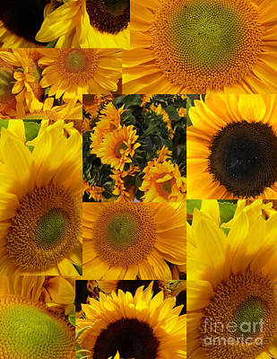 Photograph - Sunflower Collage by Susan Garren