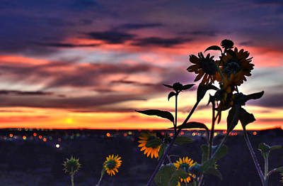 Photograph - Sunflower Cuddle by Diane Alexander