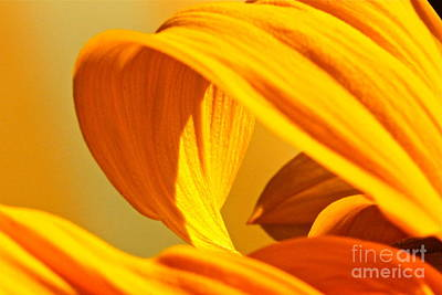 Sunflower Curve Art Print