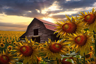 Vintage Barns Photograph - Sunflower Dance by Debra and Dave Vanderlaan