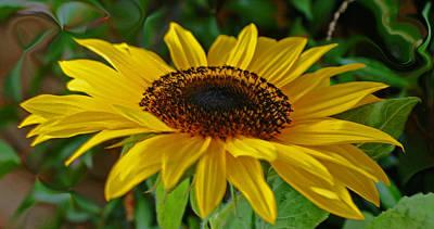Photograph - Sunflower by Daniele Smith