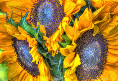Photograph - Sunflower Delight by Heidi Smith