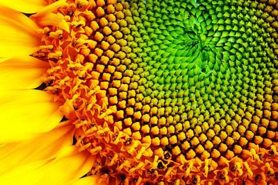 Wall Art - Photograph - Sunflower Detail by Jack Daulton