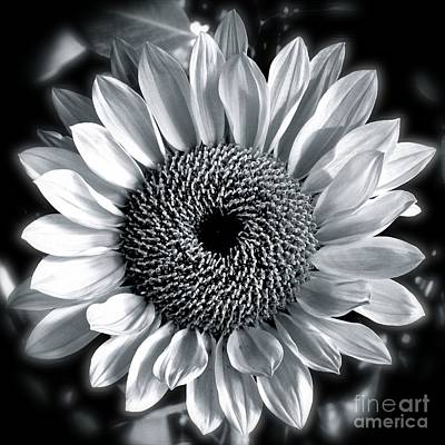 Photograph - Sunflower by Diana Black