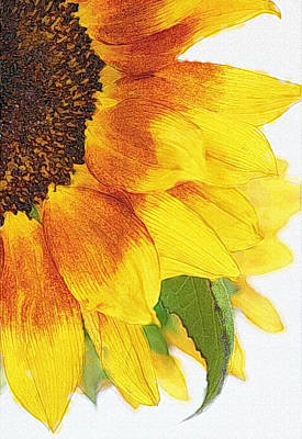 Photograph - Sunflower Digitized by David and Carol Kelly